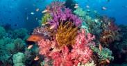 Coral reef, Raja Ampat, West Papua, Indonesia